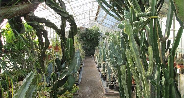 Ets kuentz le monde des cactus producteur depuis 1907 - Plantes succulentes guide pratique ...