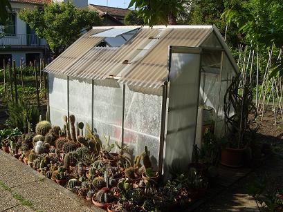 R sistance au froid de mes cactus for Cactus exterieur resistant au froid