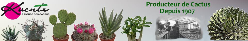 plante grasse de aaz