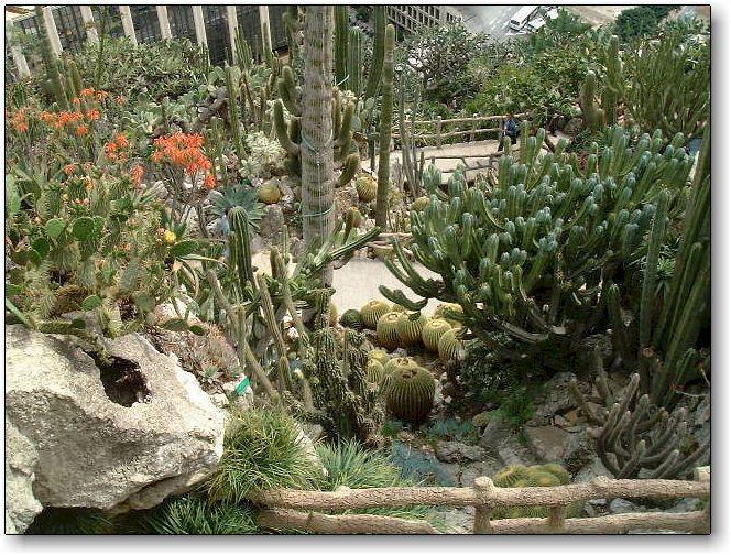 modele jardin exotique jardin paysager awesome modele jardin roubaix modele de rocaille de. Black Bedroom Furniture Sets. Home Design Ideas