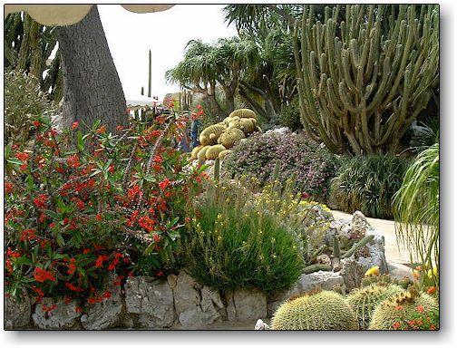 Kuentz cactus : jardins de cactus : Monaco