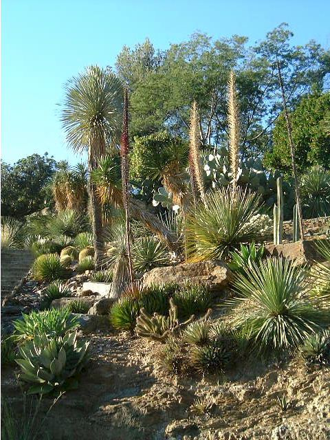 jardin de plantes grasses cheap le jardin botanique de la runion jardin botanique de la runion. Black Bedroom Furniture Sets. Home Design Ideas