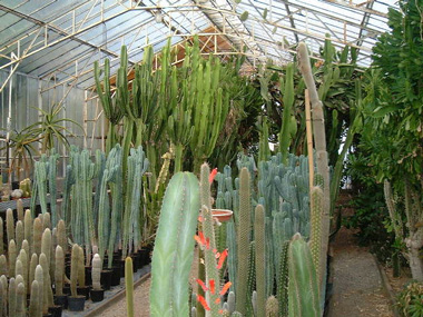kuentz cactus visite de notre p pini re quand visiter nos cultures. Black Bedroom Furniture Sets. Home Design Ideas